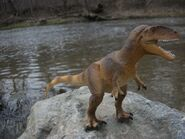 Safari-Carcharodontosaurus-1