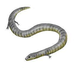 Eocaecilia.jpg