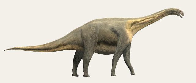 Losillasaurus.jpg