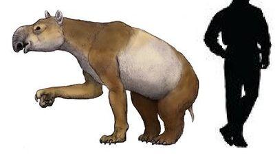 Homalodotherium.jpg