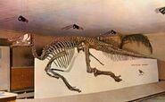 Edmontosaurus-skeleton2