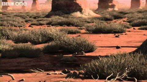 Allosaurus - Planet Dinosaur - Episode 4 - BBC One