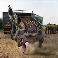 Triceratops big