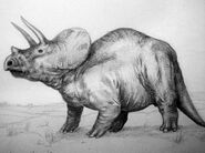 Triceratops ricce 01