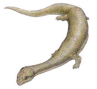 Dolichosaurus.jpg