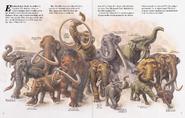Zoobooks elephant family
