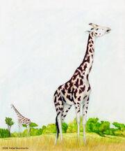 Giraffa jumae by rsnascimento-d191y1e.jpg