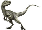Velociraptor-info-graphic.png