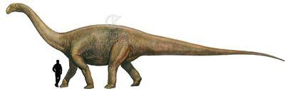 Cetiosaurus.jpg