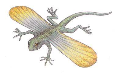 Icarosaurus.jpg