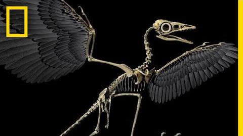 Are Birds Modern-Day Dinosaurs? National Geographic