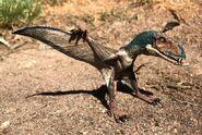 Dimorphodon Papo