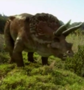 Groovy Theo Triceratops Next