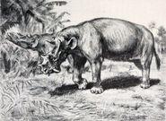 Uintatherium pair