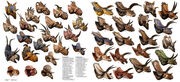 Csotonyi ceratopsians 1300.jpg