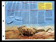 Wildlife fact file Diplocaulus inside