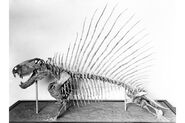 DimetrodonNMNH