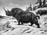 Wooly rhinoceros Charles R. Knight