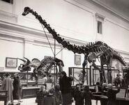 Diplodocus 1940s
