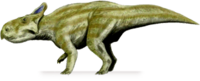 Montanoceratops.png