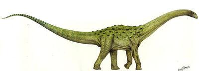 Neuquensaurus.jpg