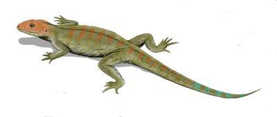 Hylonomus.jpg