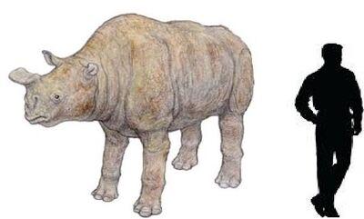 Rhinotitan.jpg