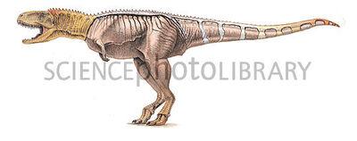Eoabelisaurus.jpg