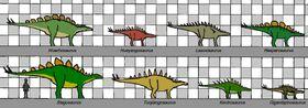Stegosauria size 012.jpg