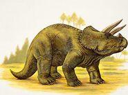 Triceratops 2