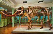 Denver-Museum-mastodon-1000x645