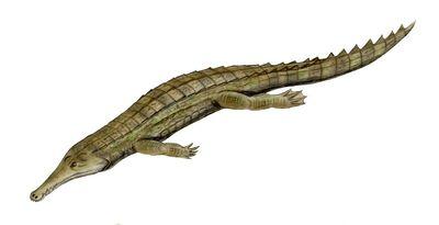 Elosuchus.jpg