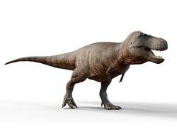 Accurate Rex.jpg
