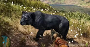 Far cry primal sabre tooth