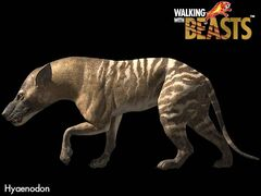Hyaenodon large.jpg