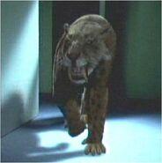 Sabertooh Tiger (Attack of the Sabretooth)