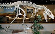 Albertosaurus sarcophagus mount