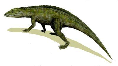Protosuchus.jpg