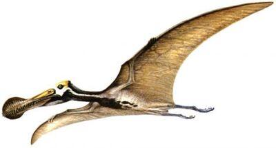 Tropeognathus.jpg