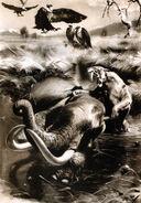 Smilodon by zdenek burian 1941