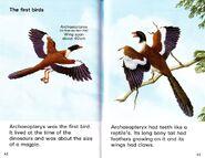 Archaeopteryx Ladybird Dinosaurs