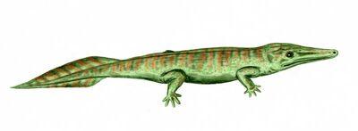 Archegosaurus.jpg