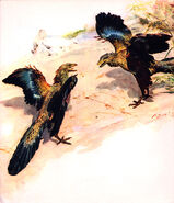 Archaeopteryx by zdenek burian 1960