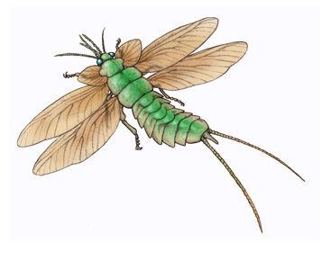 Paleodictyoptera.jpg