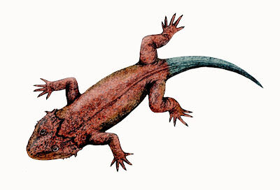 Lanthanosuchus.jpg