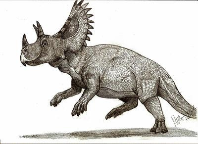 Ceratops.jpg