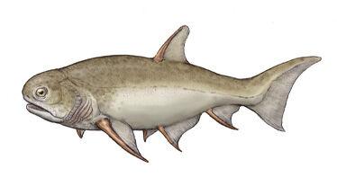 Cheiracanthus.jpg
