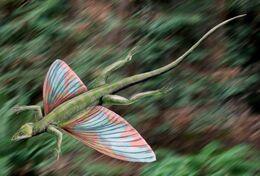 Coelurosauravus.jpg