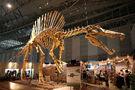 FileSpinosaurus skeleton