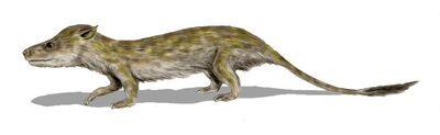 Oligokyphus.jpg